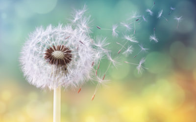 Beating The Yellow Beast: Tackling Dandelions In Your Summer Commercial Maintenance